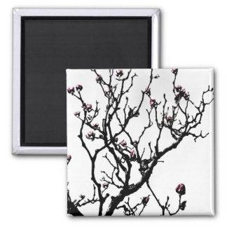 Magnolia Blossoms 2 2 Inch Square Magnet
