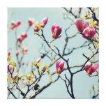 Magnolia Blossoms 2 Stretched Canvas Prints