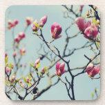 Magnolia Blossoms 3 Beverage Coasters