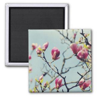 Magnolia Blossoms 3 2 Inch Square Magnet