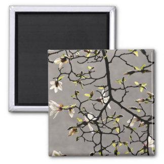 Magnolia Blossoms 2 Inch Square Magnet