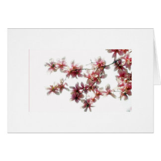 Magnolia Blossoms Note Card blanks