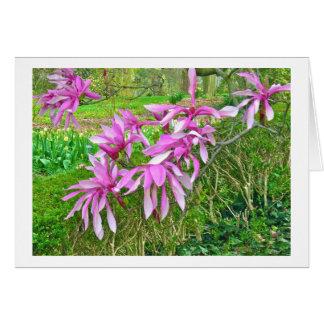 Magnolia Blossoms (photog) Card