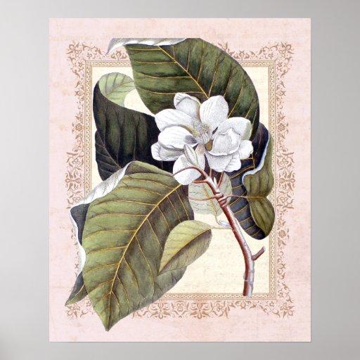 Magnolia botánica del vintage meridional de la ele posters
