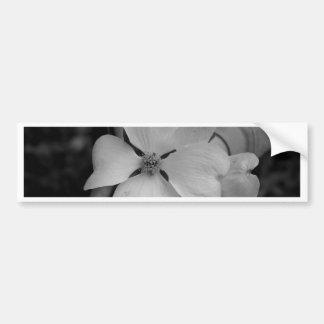 magnolia pegatina de parachoque