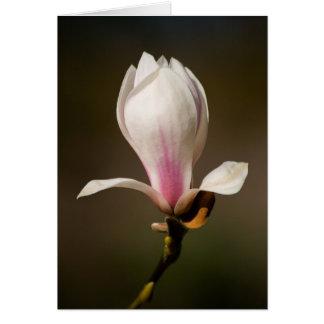 Magnolia by cARTerART Card