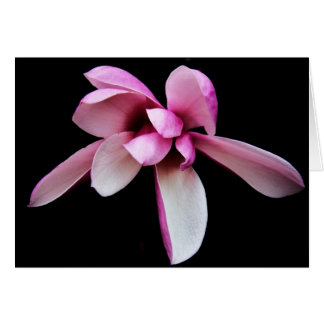 """""""magnolia"""" by Larry Coressel Card"""
