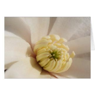 Magnolia Close-Up Card