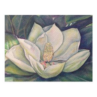 Magnolia de acero postales