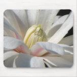 Magnolia de estrella alfombrilla de ratones
