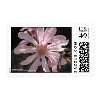 Magnolia de estrella sellos