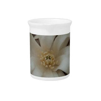 Magnolia de la bola de nieve jarras para bebida
