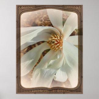 Magnolia de la primavera poster