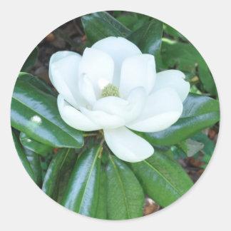 Magnolia de Magnificant Pegatinas Redondas