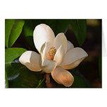 Magnolia de Mississippi Tarjeta De Felicitación