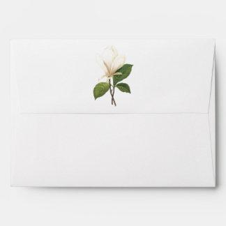 magnolia de platillo (soulangiana de la magnolia) sobre