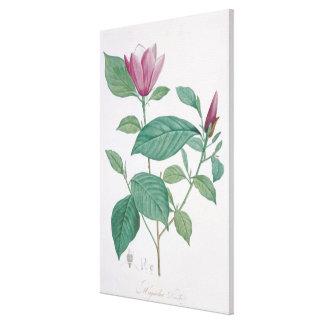 Magnolia discolor, engraved by Legrand (colour lit Canvas Print