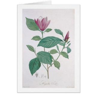 Magnolia discolor, engraved by Legrand (colour lit Card