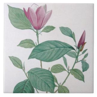 Magnolia discolor, engraved by Legrand (colour lit Ceramic Tile
