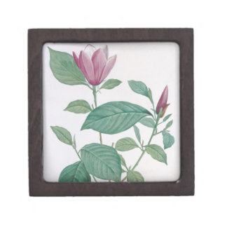 Magnolia discolor, engraved by Legrand (colour lit Jewelry Box