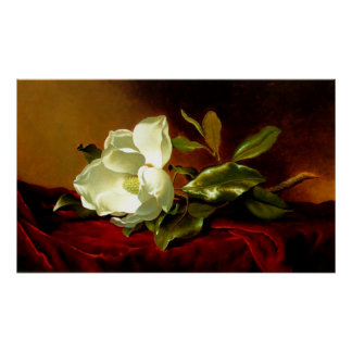 Magnolia en el terciopelo rojo - impresión póster