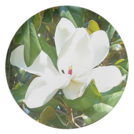 Magnolia floreciente platos para fiestas
