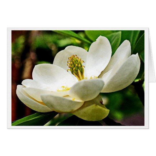 Magnolia Flower Close Up Card