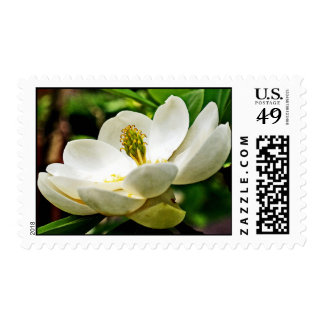Magnolia Flower Close Up Postage Stamps
