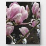 Magnolia Flower Placa