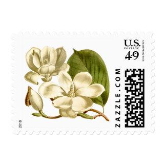 Magnolia Flower Postage Stamps