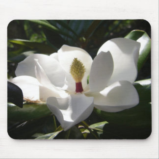magnolia flower tree flowers photography mousepad
