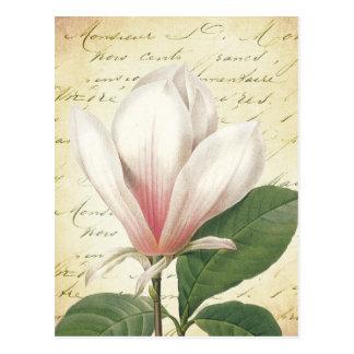 Magnolia Flower Vintage Botanical Postcard