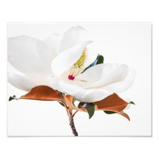 Magnolia Flower White Magnolias Floral Blossom Photo Print