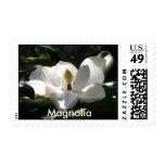 magnolia, foto de los sellos de las flores de las