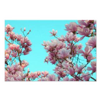 Magnolia Fotografías