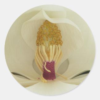 Magnolia Galissonniere grandiflora Pegatina Redonda