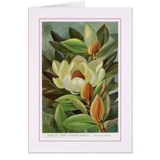Magnolia Grande-Florecida Felicitación