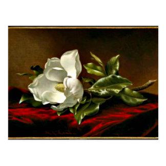 Magnolia Grandiflora artwork Postcard