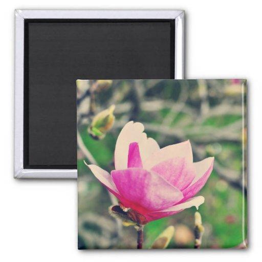 Magnolia Imán Cuadrado