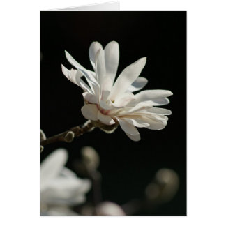 Magnolia in the Sun Card