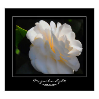 Magnolia Light Black Border Poster