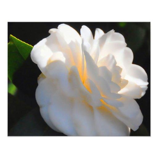 Magnolia Light Photo Print