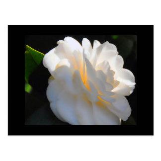 Magnolia Light Postcard