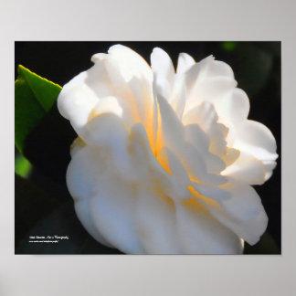 Magnolia Light Poster