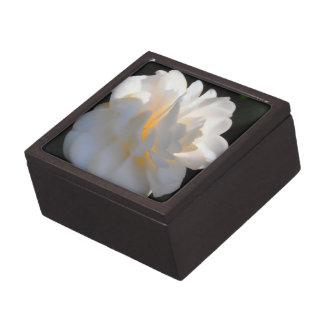 Magnolia Light Premium Gift Boxes