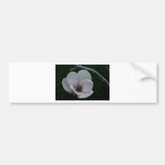 Magnolia - Make a wish Bumper Sticker