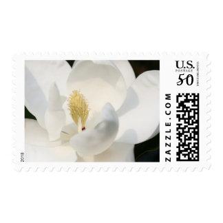 Magnolia medium US postage stamp