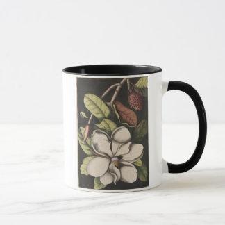 Magnolia meridional