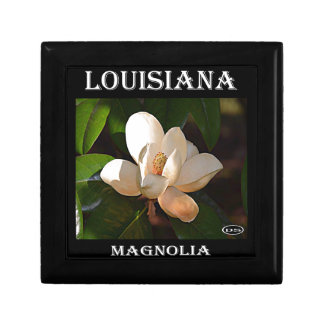 Magnolia meridional de Luisiana