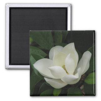 Magnolia meridional iman de frigorífico